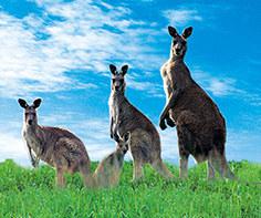 走遍澳大利亚